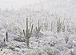 Desert Blizzard.jpg