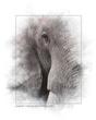 elephant_painting_web.jpg