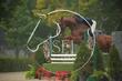 OSF HEDGE 9-15-2021-5.jpg