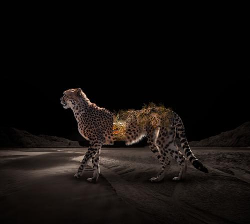 Mutant-Cheetah.jpg