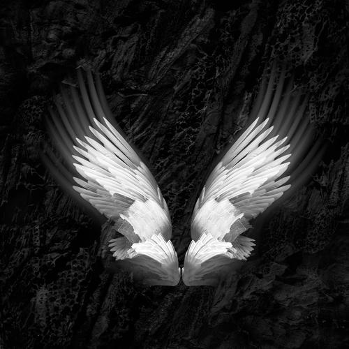Wings 20.jpg