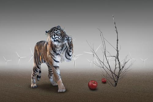 Apple  Tiger 1.jpg