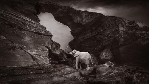 Lone elephant 1.jpg