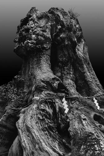 Sacred Tree 2.jpg