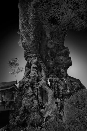 Sacred Tree 3.jpg