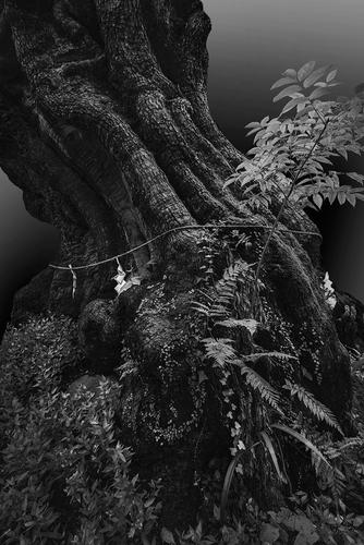 Sacred tree 1.jpg