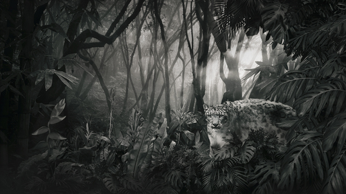Snow Leopard - Forrest.jpg