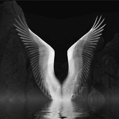 Wings 1_1.jpg