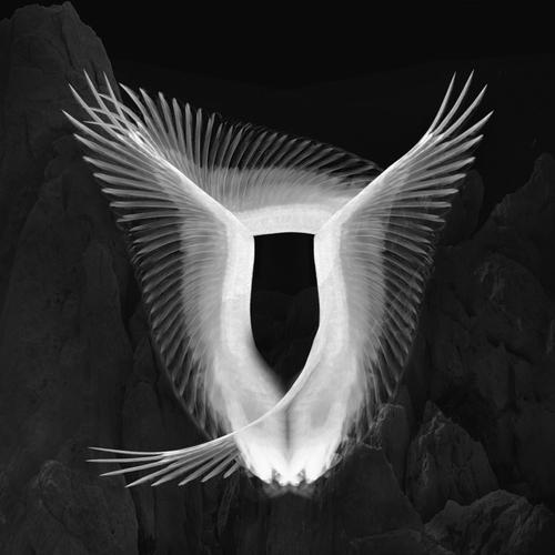 Wings 4.jpg