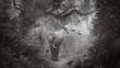 Elephant - Forrest.jpg