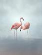 Flamingos.jpg