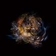 Nautilus Universe - Dancing.jpg