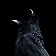 Raven crow 1.jpg