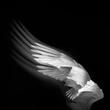 Wings 6.jpg