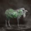 Zebra 33.jpg