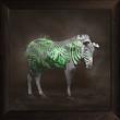 Zebra-1 Framed.jpg