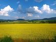 Polish Farmland.jpg