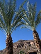 Arizona_Palms_3667.jpg