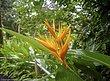 16 Flower 07 CR.jpg