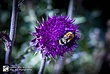 Bee 11.jpg