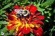 Bee 21.jpg