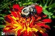 Bee 31.jpg