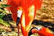 Flamingo-3.jpg
