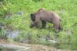 Grizzley Bear 3-1535.jpg