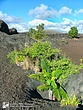 Hawaii-Volcanoes-2.jpg