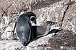 Penguin-1.jpg