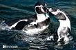 Penguin-3.jpg