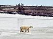 Polar-Bear--206-9-WEB.jpg