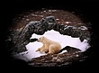 Polar-Bear--246-9.25x12-WEB.jpg