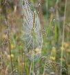 Spider 1-4430.jpg
