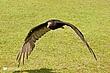Vulture-41.jpg