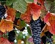 Vin_IMG_1740.jpg