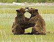 Bears 10.jpg