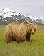 Bears 11.jpg