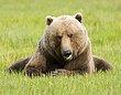 Bears 12.jpg