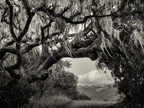 Garland Oaks and Moss.jpg