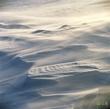 Snow  009  800px.jpg