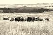 buffalo 6360.jpg