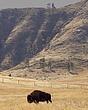 buffalo sandhills 6341.jpg