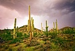 cactus strm clds grn DSC_0051 (Medium).jpg