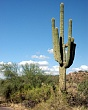 cactus1.jpg
