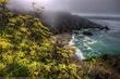 Coastal Fog.jpg