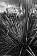 Desert Grass.jpg
