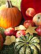Autumn harvest2.jpg