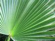 palm 3.jpg