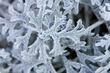 More Better Frost2008113000142008.jpg